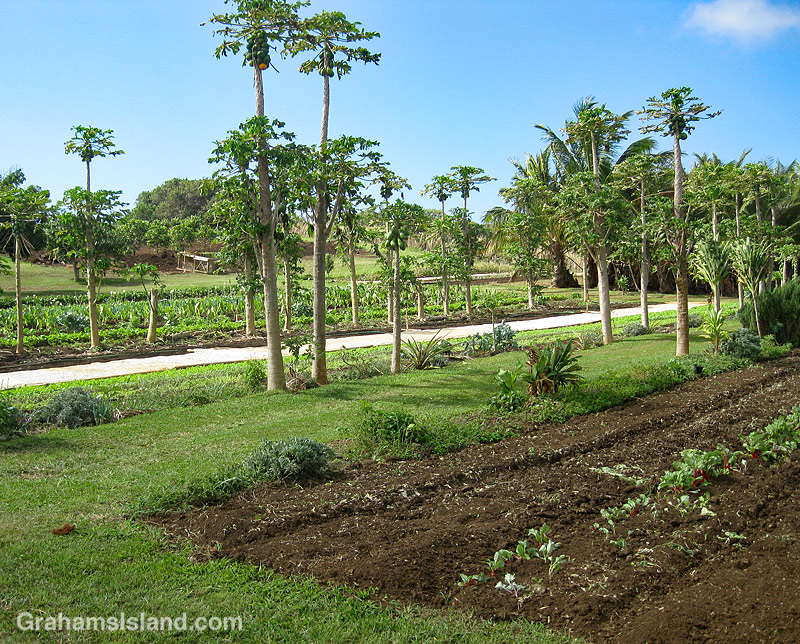 Sage Farms