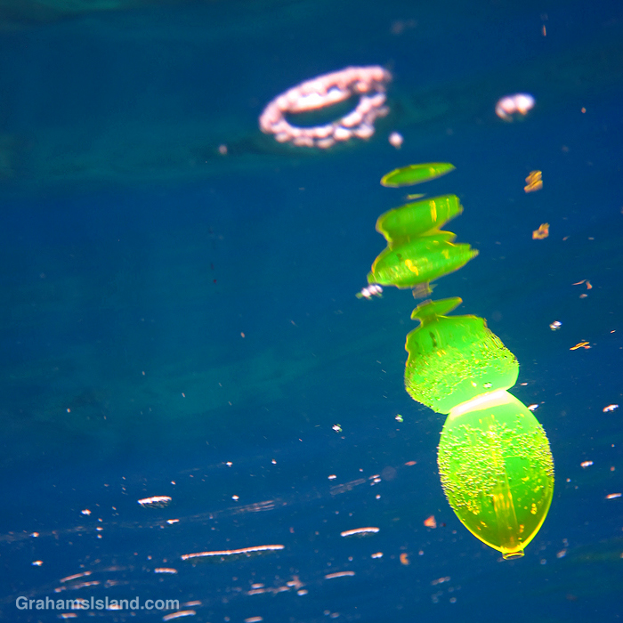 A green float in the water off Hawaii