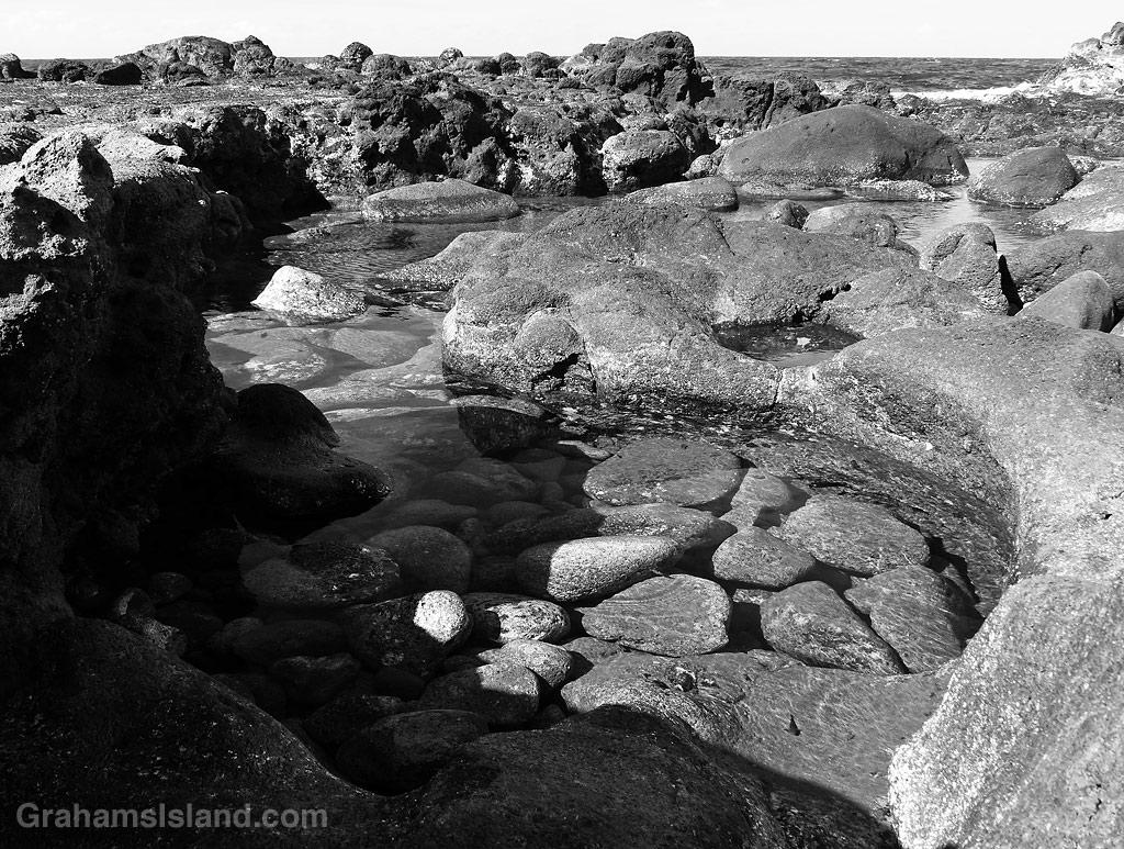 A tide pool on the North Kohala coast, Hawaii