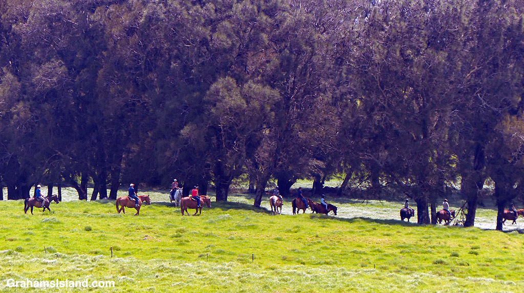 Horse riders cross a pasture