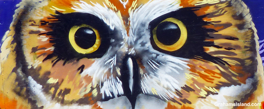 A mural of an owl in Hawi, Hawaii