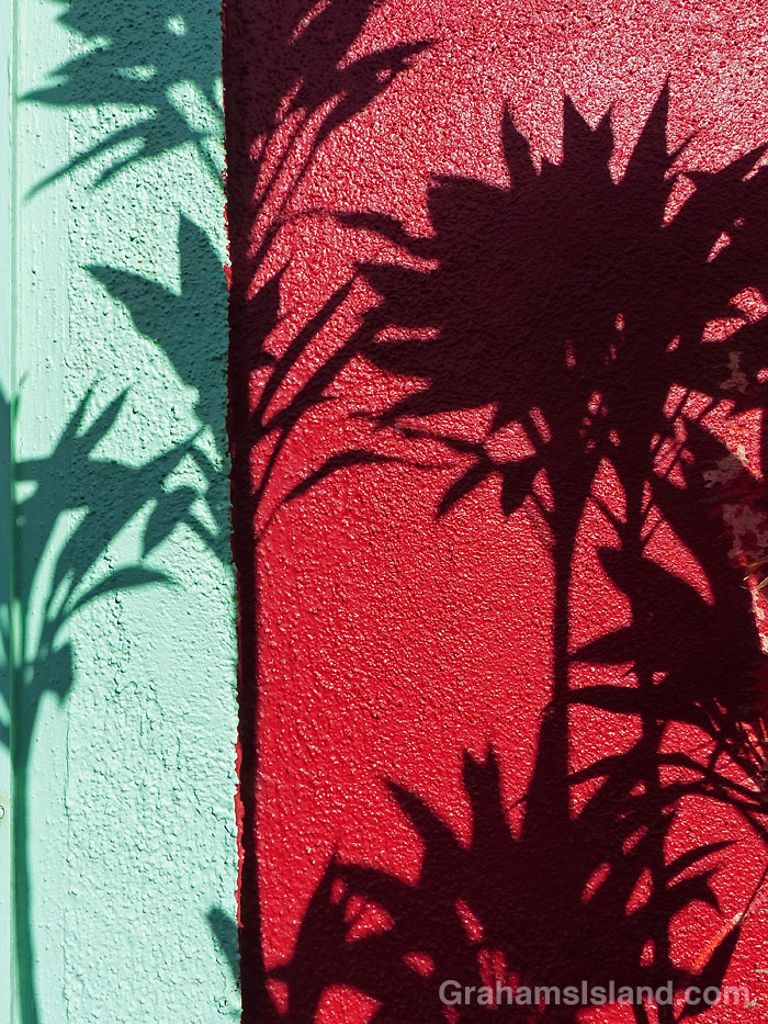 Plant shadows on a brightly colored wall