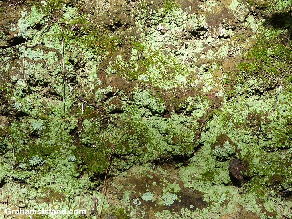 Lichens and moss on a rock wall