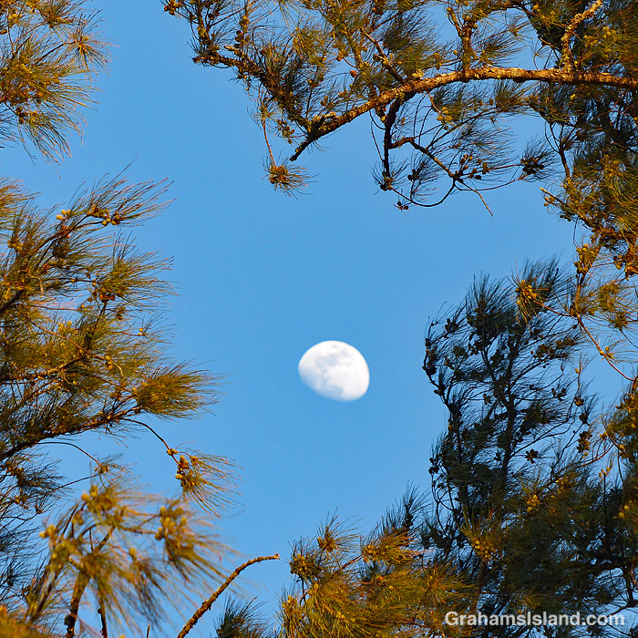 The moon seen through tree branches