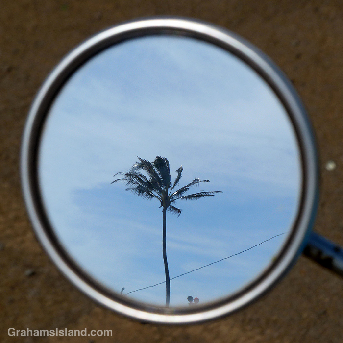 A palm tree reflected in the mirror of a motor scooterr