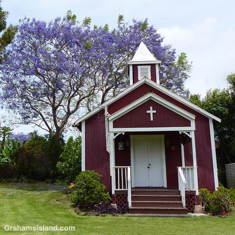 Pu'uanahulu Baptist Church seen against a backdrop of a blooming jacaranda tree