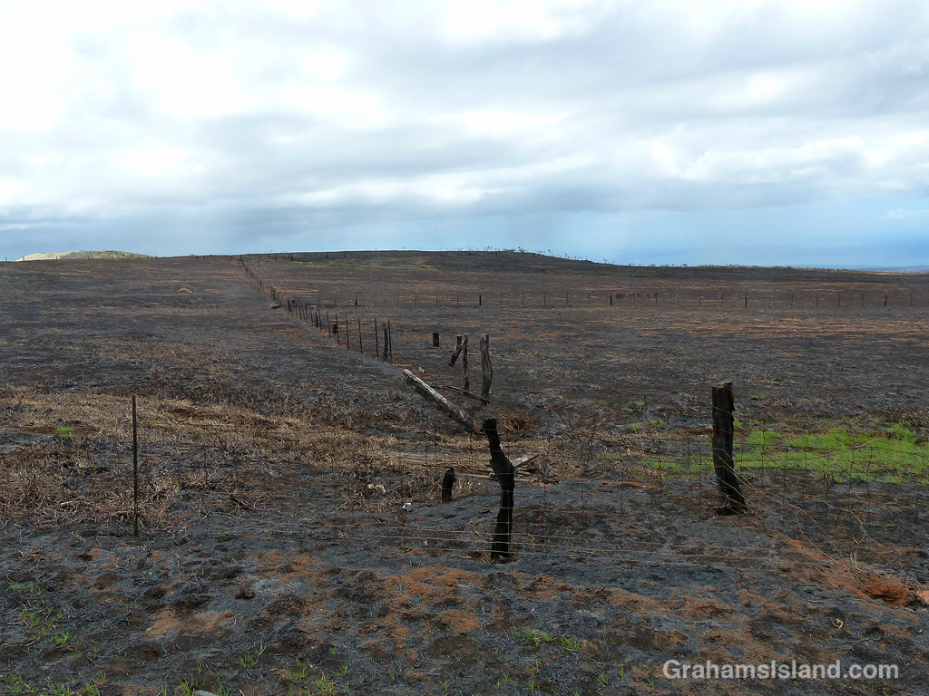 A fence line after a brush fire