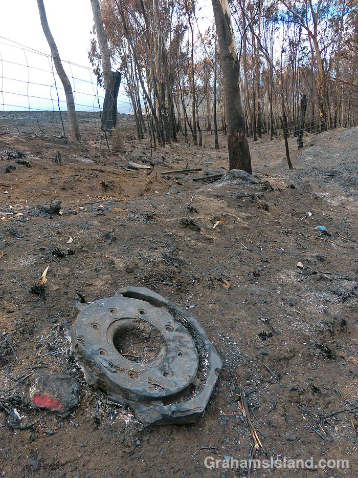 Aftermath of a brush fire