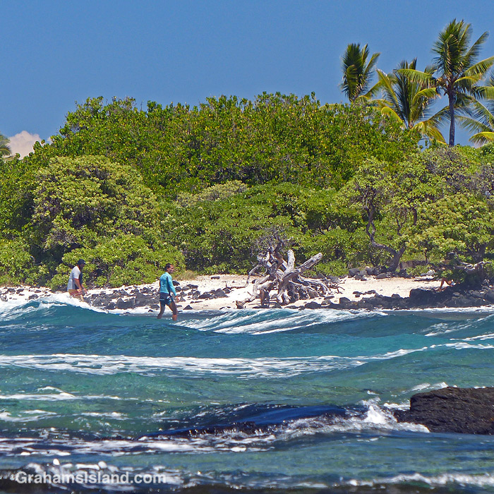 Surfers returning to shore at Pine Trees in Hawaii